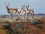Antelope Attitudes