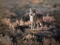 the-mexican-grey-wolf-web