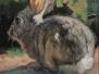 Rabbit Appreciation