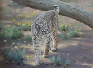 painting of a bobcat by Linda Budge